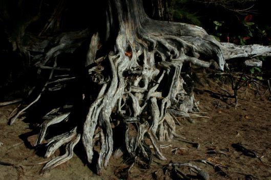 roots ke'e beach kauai